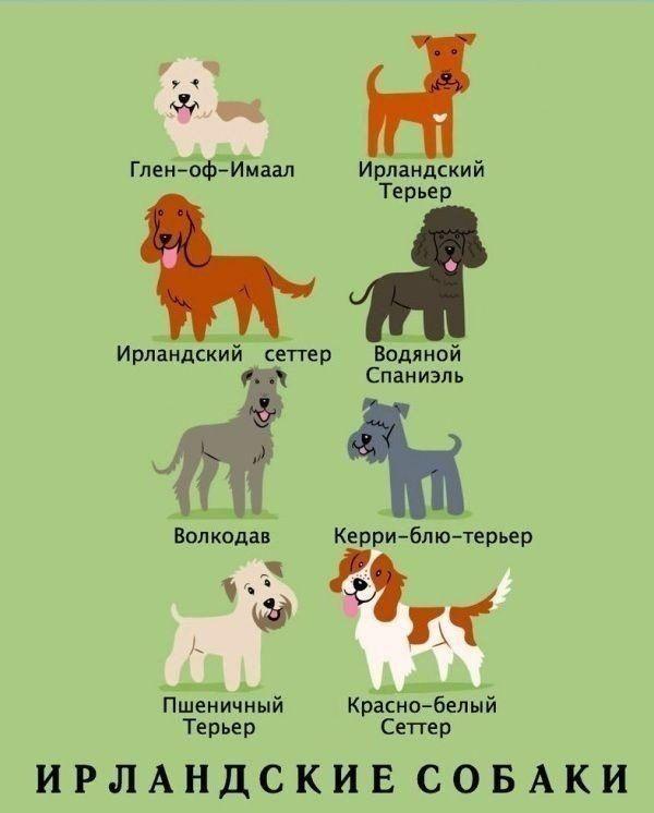 имена собак с картинками плотная, практичная довольно