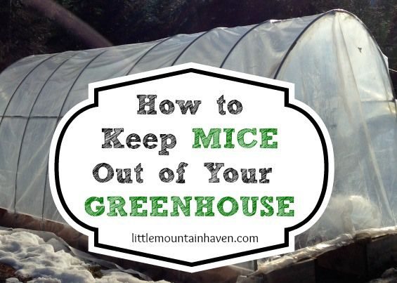 Great Deter Mice Out Of The Greenhouse Garden