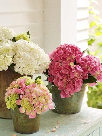 The cloudlike flowers of hydrangeas are as romantic as ever, but today's plants bloom bigger, brighter and showier than Grandma's favorites. With so many types, you'll find one perfect for your garden.