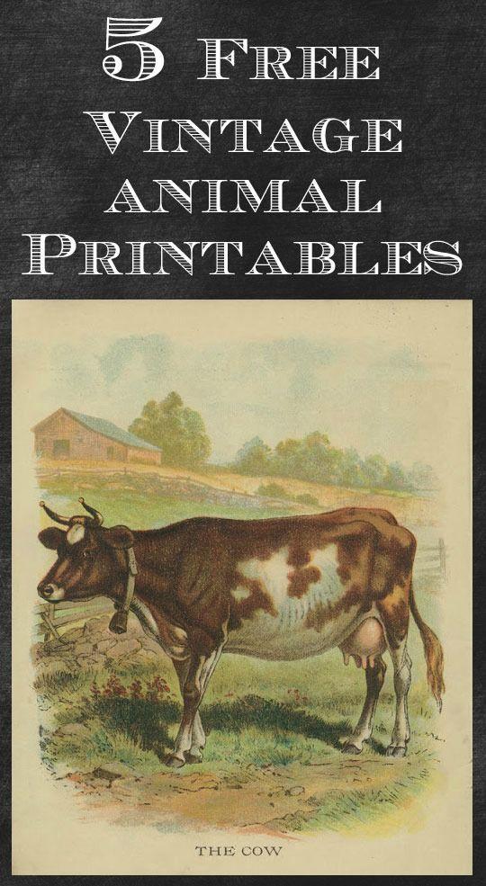 Vintage Animal Printables Printables Crafts Vintage Prints