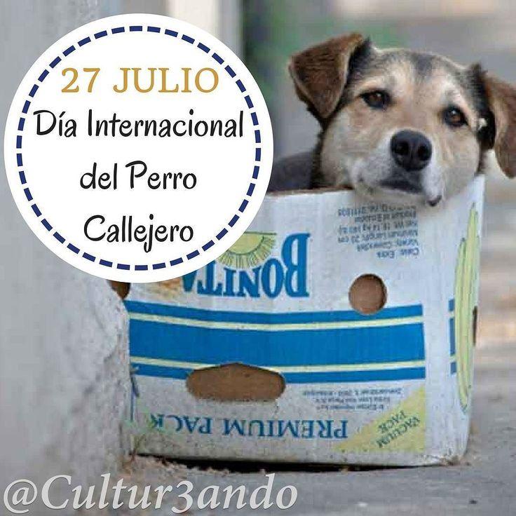 Día Internacional del Perro Callejero | 27 de julio  Adopta cuida y protege  #Cultura #Cultur3ando #Dog #perros