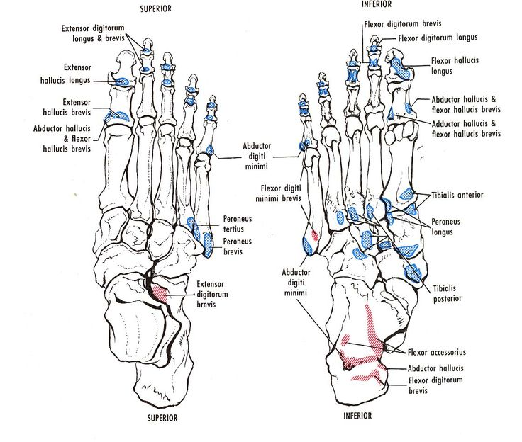 39 Best Bone Spurs In The Neck Images On Pinterest Wiring Diagram