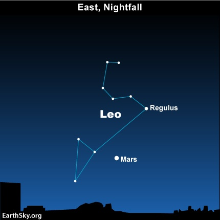 Leo it is in the Stars  Cats love to explore