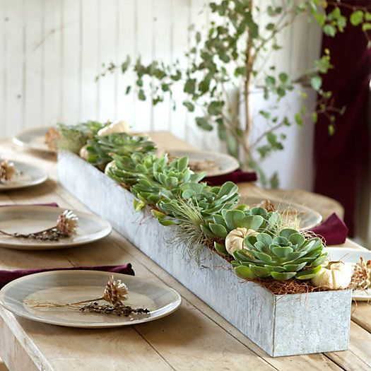 Terrain Galvanized Trough Planter. Great centerpiece for long farm table.