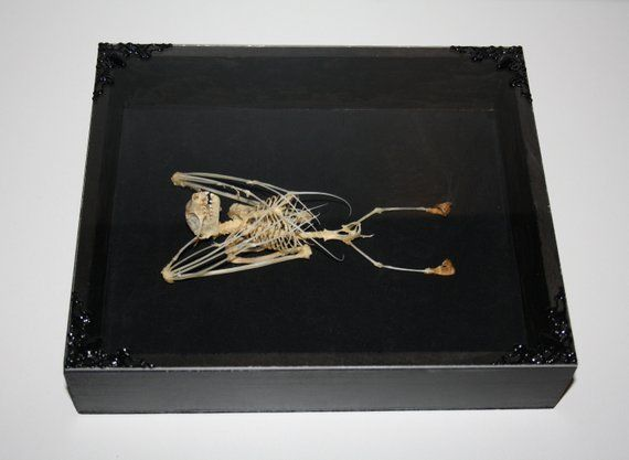 f64e0cbcf150d Taxidermy Frame Real Bat Artwork Oddity Gothic Art Decor Curiosities ...