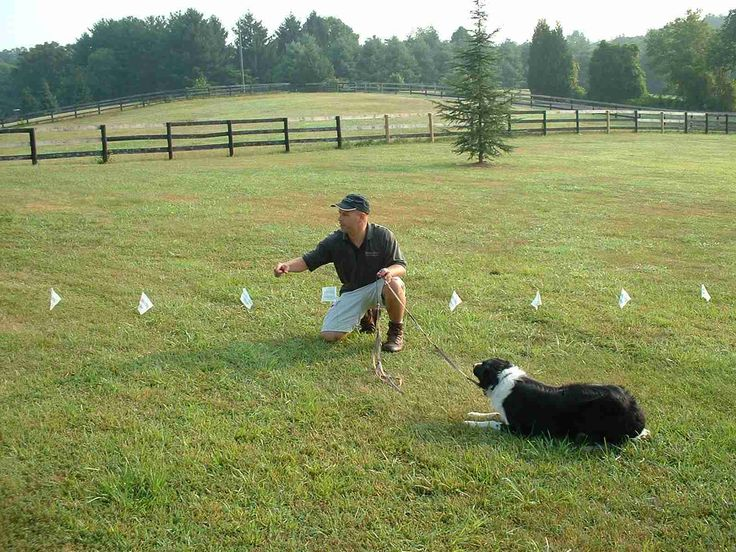 Best 25 Dog Fence Ideas On Pinterest Fence Ideas Fence