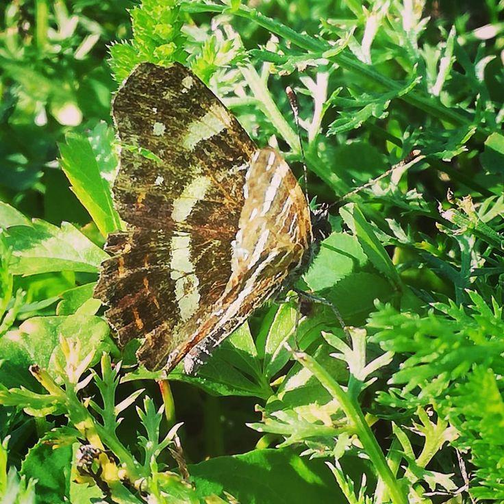 Rokibrandy Schmetterling Butterfly Great Captures Butterflies But