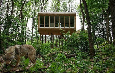Im Baumhaus schlafen und dabei Wölfe beobachten - Tipp des Tages - [SCHÖNER WOHNEN]
