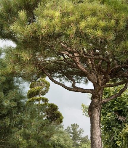 Tree Study I, by  Beth Dow - 20x200.com