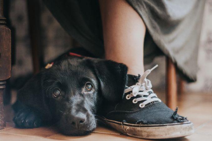 Premiação elege as melhores fotos de cachorro do ano