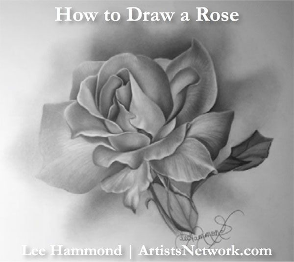 How to Draw a Rose, by Lee Hammond! #drawing #flowers #graphite #art Artist's Network