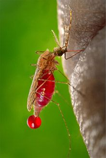 A combination drug treatment substantially reduced the incidence of #malaria in young children without causing serious side effects.