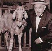 Billy Goat Curse ~ William Sianis and his goat Murphy
