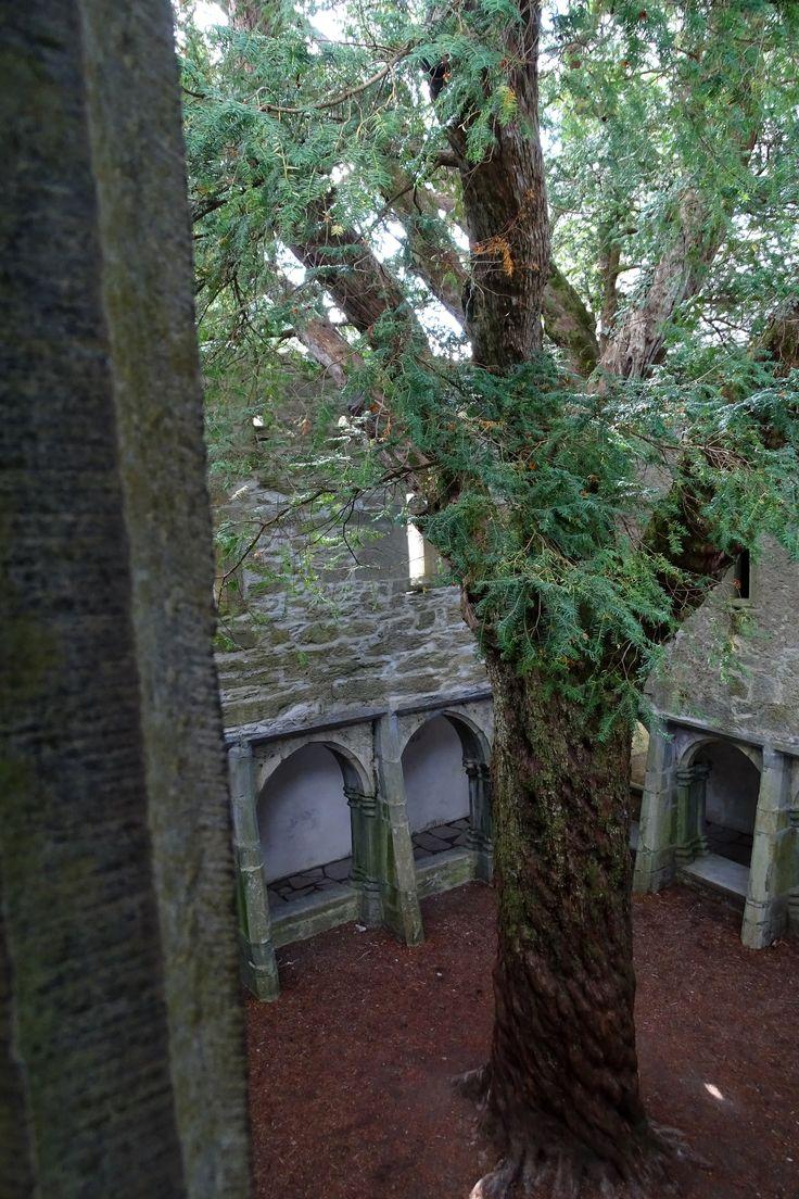 Magical place - Muckross Abbey. Killarney