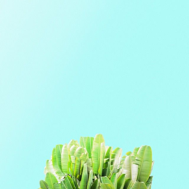 Veggies #candyfoliage