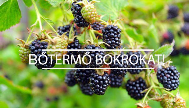 szederbokor, málnabokor metszése  #kert.tv