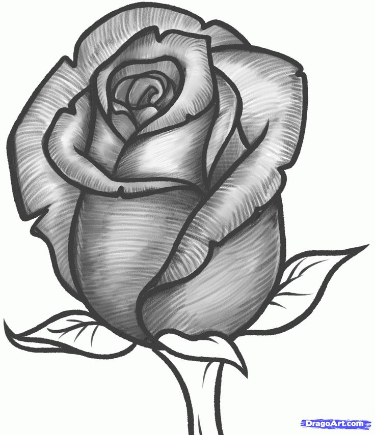 how to draw a rose bud, rose bud step 10