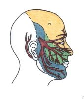 Nerves of the face that may be triggered.Trigeminal Neuralgia (Facial Nerve Pain)