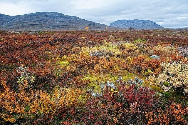 Autumn colors in Kilpisjärvi, Lapland.