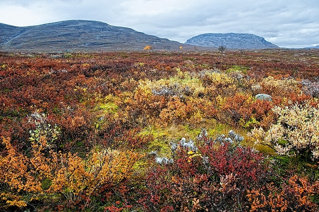 Autumn colors in Kilpisjärvi, Lapland.