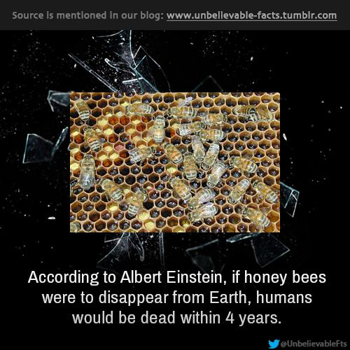 According to Albert Einstein, if honey bees were to disappear from Earth, humans would be dead within 4 years.