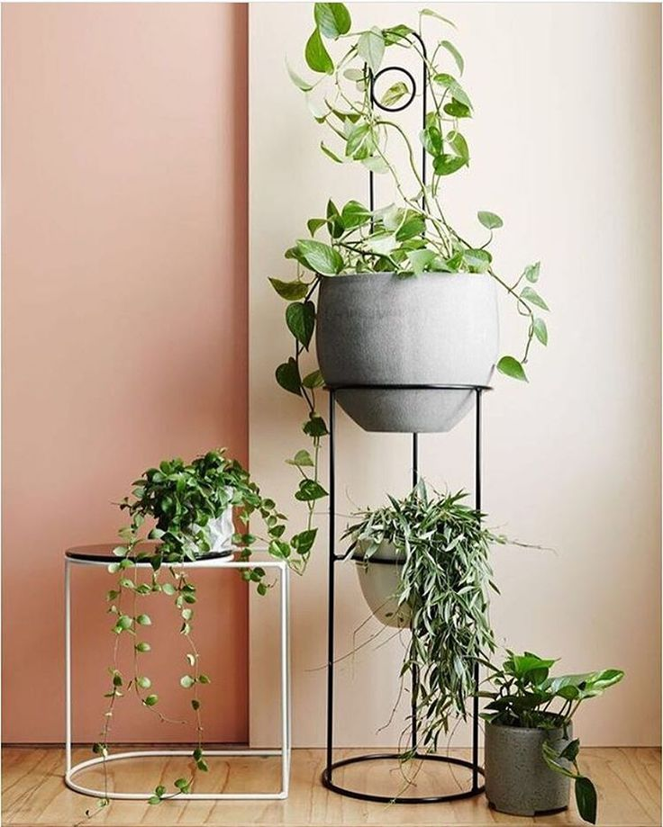 Ivy Muse 'Grace' in White, 'Comet' and 'Loop' plant stake in Black | get creative with your greenery | @annetteobrien styling: @alanalangan assist; @michellemalia_ @lorettahoughton . . . . #ivymuse #botanical #design #plantstyling #indoorplants #plants #greenery #plantlyfe