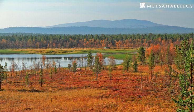 Pallas-Yllästunturi National Park, Finland. Kuva / Photo: Juha Kalaoja