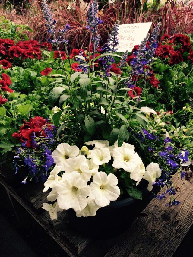 Inspiration : Saint-Jean-Baptiste Fête Nationale du Québec ! Vous aimez l'idée d'avoir un pot de fleur aux couleurs d'un événement ?!