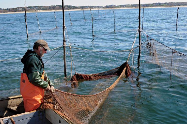 Weir-Fishing_Shareen-Davis_0008