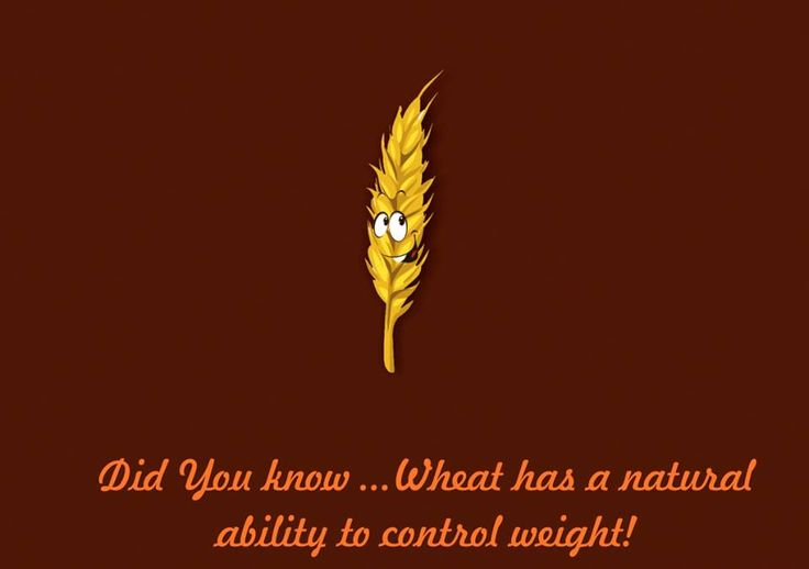 Did you know this #HealthBenefit of Wheat ?  Controls Obesity (especially in women): Wheat has a natural ability to control weight in everyone, but this ability is more pronounced among women. The American Journal of Clinical #Nutrition has shown through research that whole wheat, rather than refined wheat, is a good choice for obese patients.   Women who consumed whole wheat products over long periods showed considerably more weight loss than the others subjects.  #Womenhealth #Godhum…