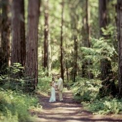 Wedding In The Redwoods Sonoma County Russian River Dawn Heumann Photography