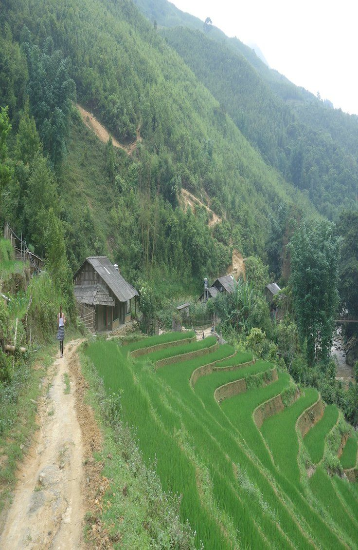 Complete guide to Sapa's rice terraces