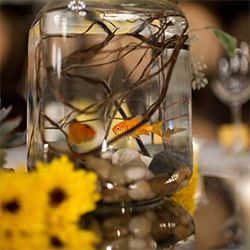 This is one we hadn't seen before: fishbowl centerpieces! The groom's only request. Nice work, Leaf it to Lexi!