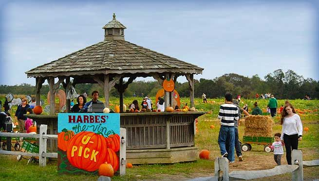 Harbes Farm & Orchard – Riverhead #TimeToSee
