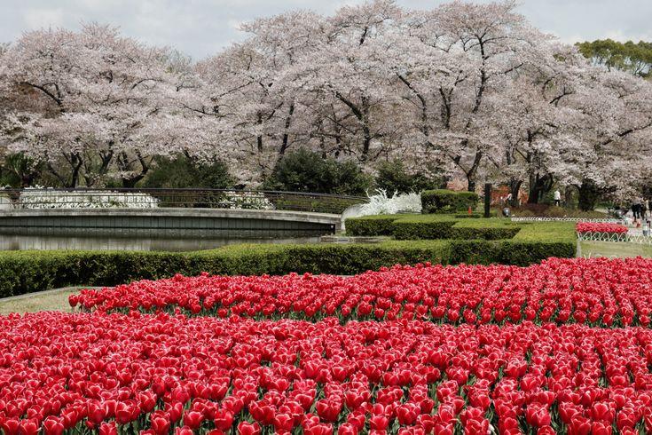 Beautiful Kyoto Gardens Japan