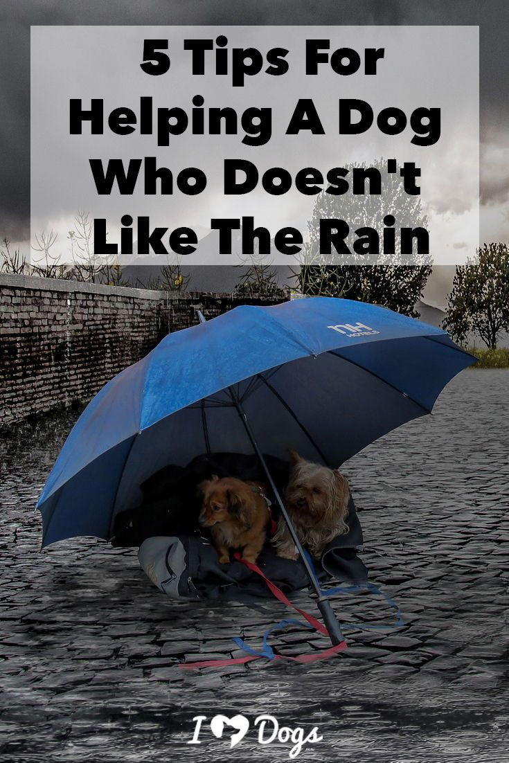 5 Tips For Helping A Dog That Doesn T Like The Rain Training Your Dog Dogs Getting A Puppy