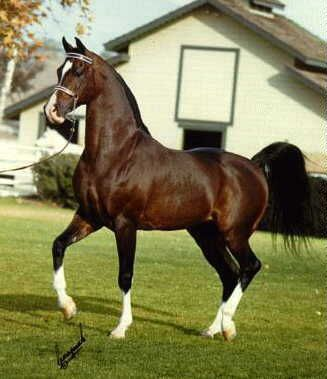 Khemosabi (1967–2001) is the horse I fell in love with when I saw him in the mid 80's at the international Arabian horse show in Albuquerque,NM --