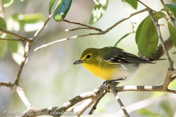 Central Florida Backyard Bird Identification   Backyard ...