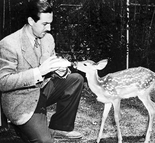 Walt Disney with the fawn Bambi that was kept as a pet atThe Walt Disney Studios and studied by the artists.