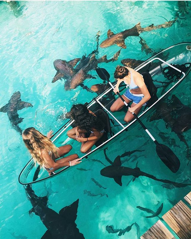 In a glass bottomed canoe boat, swimming with sharks. Photo: @kkerzner, moodytoning