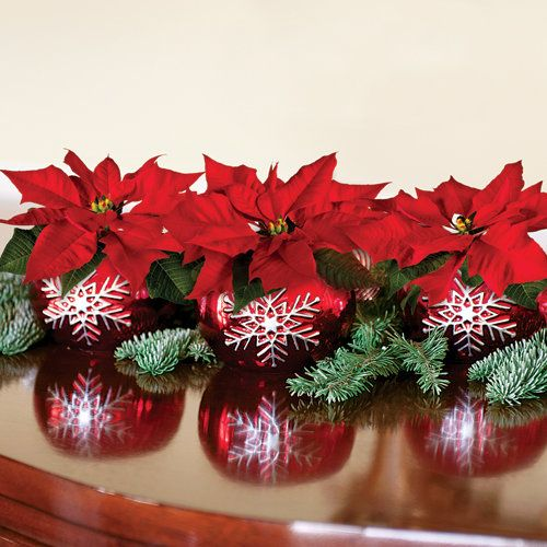 "Red Poinsettia Trio:  A perfect ""emergency"" gift you can give to anyone, these little votives are decorative in themselves. But they come with gorgeous Poinsettia plants, making them the ideal holiday decoration! -- This product is no longer available, however click the image to see this year's Festive Gift Plants!"