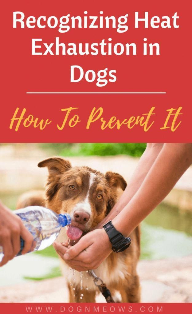 Pin By Great Choice Pet On Pet Lovers Heat Exhaustion In Dogs