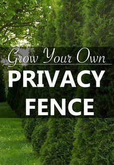 Block out your neighbors with a row of large, low maintenance evergreen trees that form a solid living wall.