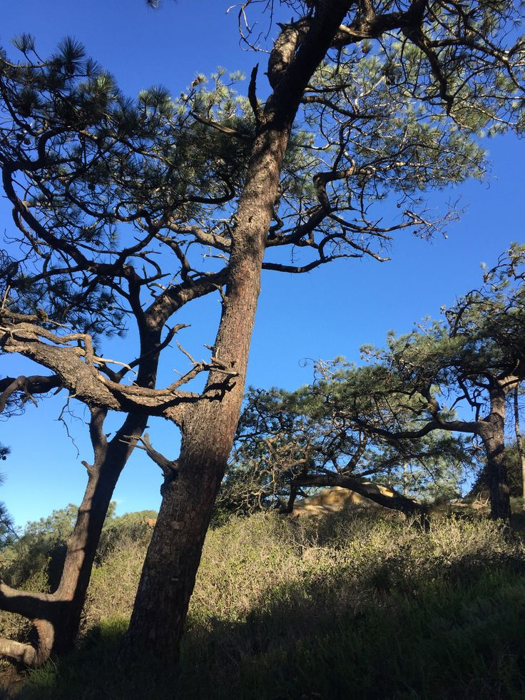 Torrey Pine Reserve, March 2015