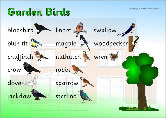 Ned Versie Garden Birds Word Mat Sb3584 Sparklebox