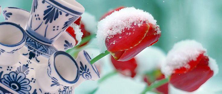 tulip vase