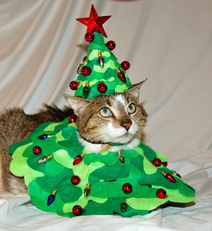 25 best Bob! The Famous Cat images on Pinterest | Legends, Bobs ...