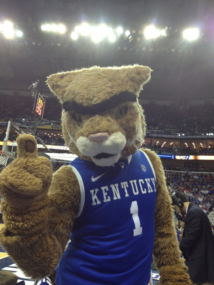 Wildcat rockin' the brow ;)