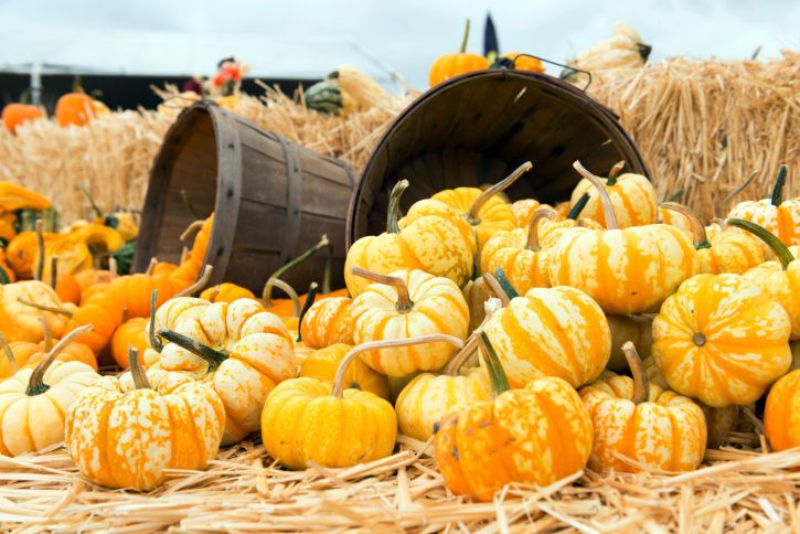 5 Fun Fall Festivals in Ohio | Inn & Spa at Cedar Falls | Hocking Hills, OH