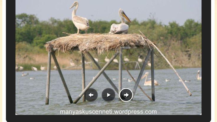 Balıkesir Manyas gölü #Türkiye #burasıharikadostum
